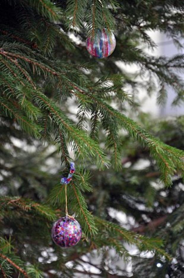 Call for Christmas tree recycling in Sutton