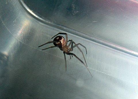 A false widow spider bit Rebecca Deal's baby after her flat in West Ewell became infested with the spiders